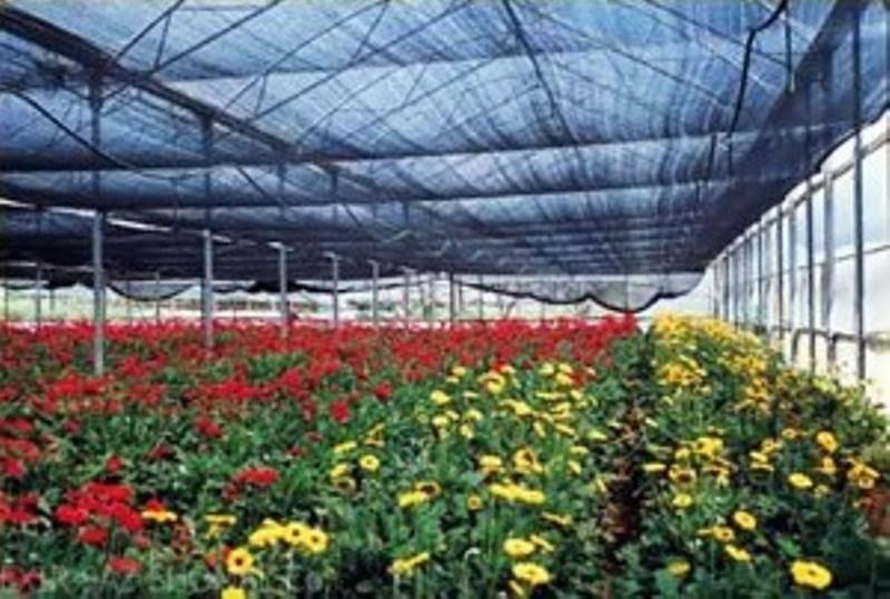 1.5 میلیون گل شاخه بریده در چهارمحال و بختیاری تولید شد