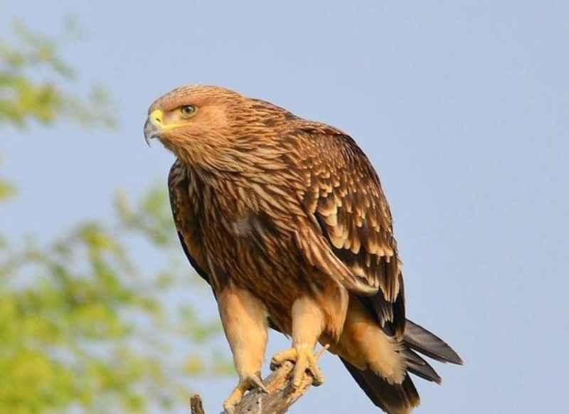ملکشاهی، زیستگاه 26 نوع پرنده شکاری است
